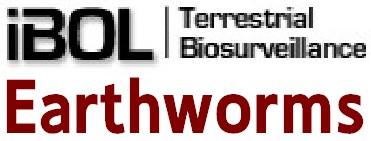 Logo_iBOLEW
